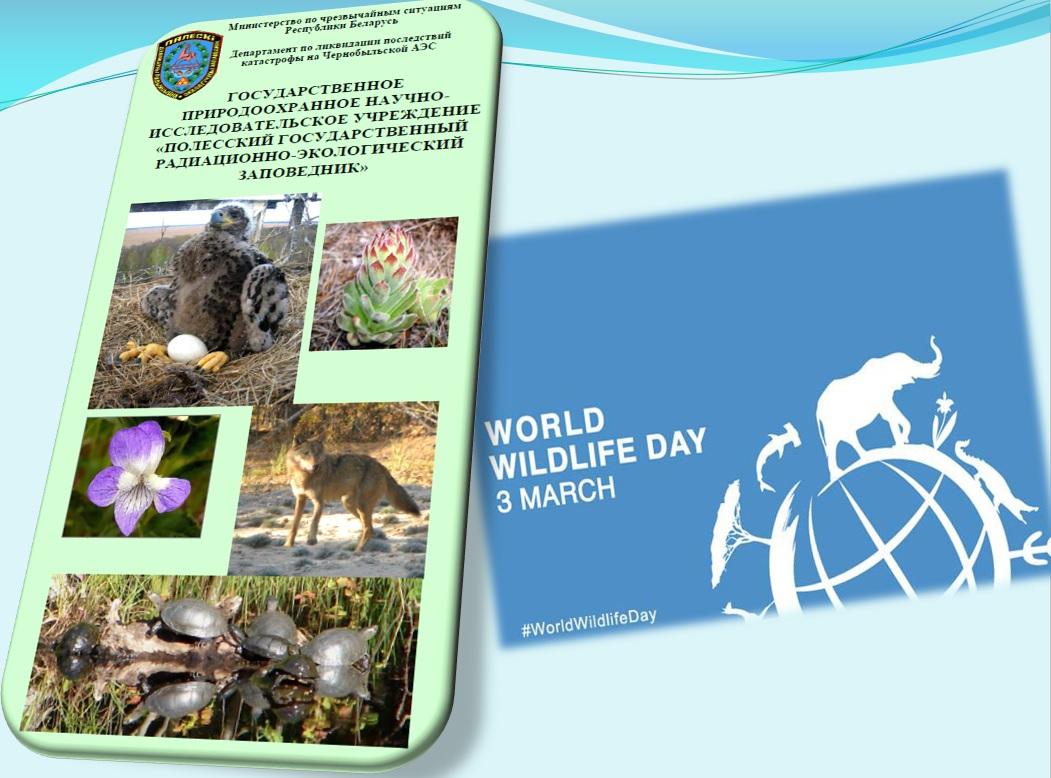 3 марта – Всемирный день дикой природы. В фокусе – Полесский государственный  радиационно-экологический заповедник aedb5ecb271